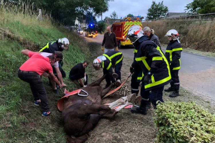 Curious: mutilated and murdered horses ... satanic ritual?  (PHOTOS)