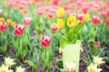 ¡¡Llega la primavera!! Qué es el Equinoccio de primavera y cuándo sucede