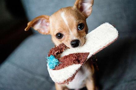 Día Nacional del Cachorro… ¡Adopta amor puro para tu vida!