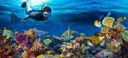 Snorkel para principiantes… ¿Qué se requiere para aprender?
