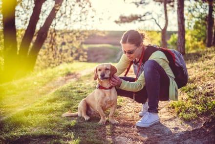 Pulgas y garrapatas: 5 repelentes naturales y 4 productos de veterinaria para evitarlos