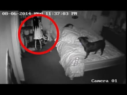 Perros ghostbuster: 5 encuentros entre mascotas y fantasmas grabados en vídeo