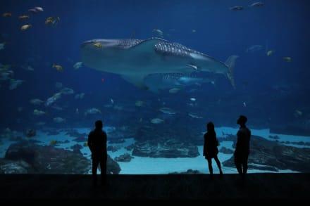 El Georgia Aquarium ofrece encuentros mágicos con tiburones ballena y miles de especies marinas