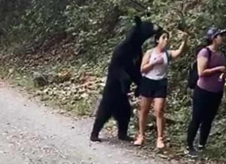 Oso sorprende a paseantes en parque y mujer se toma selfie con él (VIDEOS Y FOTOS)