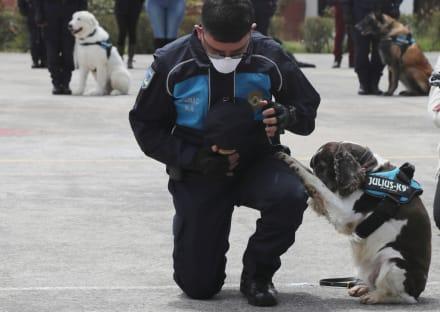 TEXAS: Mujer de Dallas enfrenta deportación por maltrato animal contra perrito Muffy (FOTO)