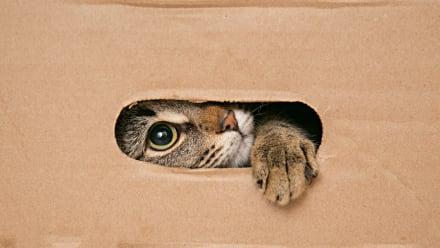 Curioso: Miles de mascotas muertas en cajas de envío (FOTOS FUERTES)
