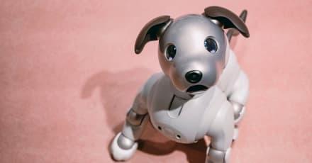 Perros robot ayudan a ancianos a sobrellevar la cuarentena