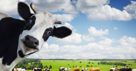 'Impossible Foods' logra diseñar leche de vaca a partir de plantas