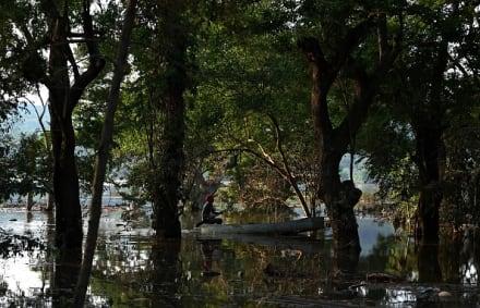 Enorme cocodrilo aparece en Florida tras el paso de la tormenta Eta