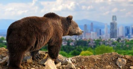 Ciudad japonesa utiliza lobos robóticos para ahuyentar osos