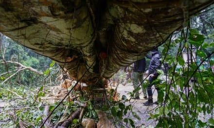 Niños quedan huérfanos luego de que árbol enorme cayó sobre sus padres