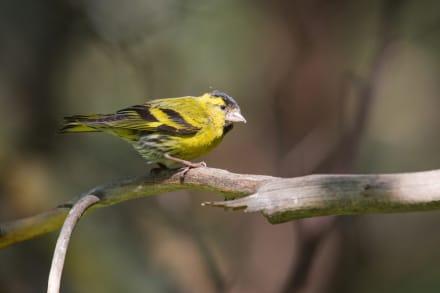 Los CDC reportan brote de salmonella por pájaros silvestres en 8 estados
