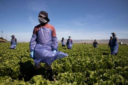 Despiden a hispana trabajadora agrícola tras exigir pago justo (VIDEO)