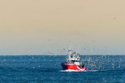 Reportan saldo mortal y 23 heridos tras voltearse un bote en San Diego