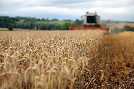 Gobernador firma ley sobre pago de horas extras a trabajadores agrícolas