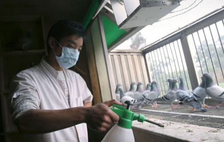 China reporta posible primer caso humano de gripe aviar H10N3