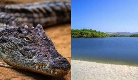 Turista atacada por cocodrilo durante vacaciones en México lucha por su vida