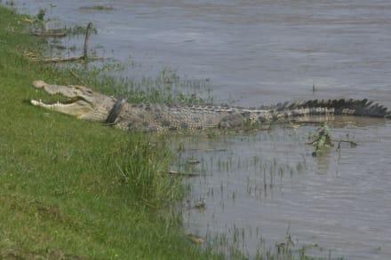 CURIOSO: Encuentran el cuerpo de una mujer que pudo ser comida por un caimán