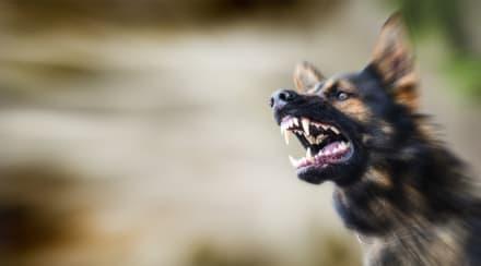 Madre halló a su hija Lyssa Rose devorada por 20 perros y ahora quiere que los dueños vayan a la cárcel
