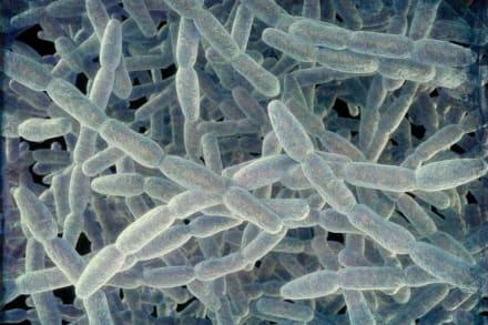 Bacteria Legionella reaparece en hospital de EE.UU.