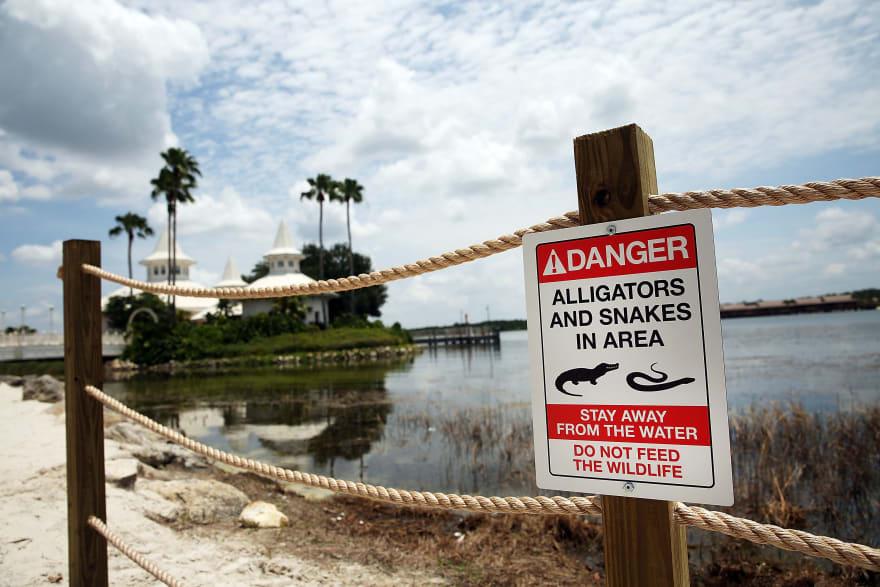 Padres de niño devorado por cocodrilo en Disney dan increíble noticia (FOTOS)