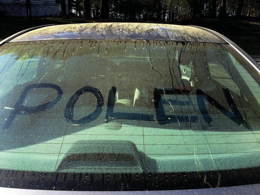 El polen: la marejada verde-amarilla que afecta a Atlanta en la primavera