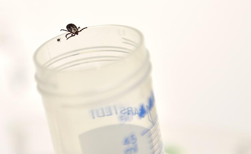 Qué es la enfermedad de Lyme y cómo se trata