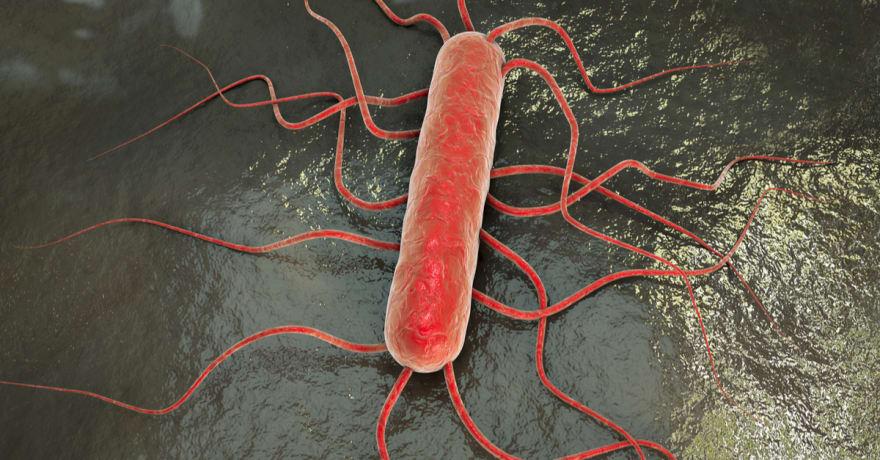 Listeria: Qué es esta bacteria y cómo cuidarte de ella