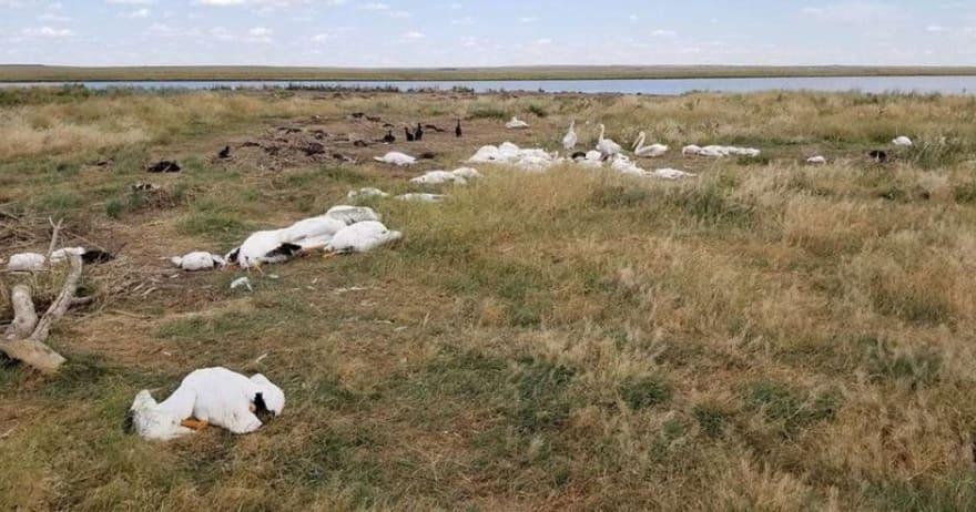 Llueven miles de pájaros muertos en Montana