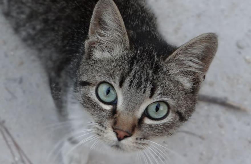 CURIOSO: Silueta de gato desata el misterio de si es un fantasma o ilusión (VIDEO)