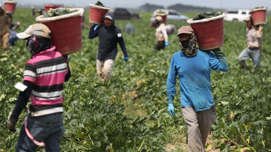 Crece empleo para trabajadores mexicanos en EE.UU. y también aumentan las remesas