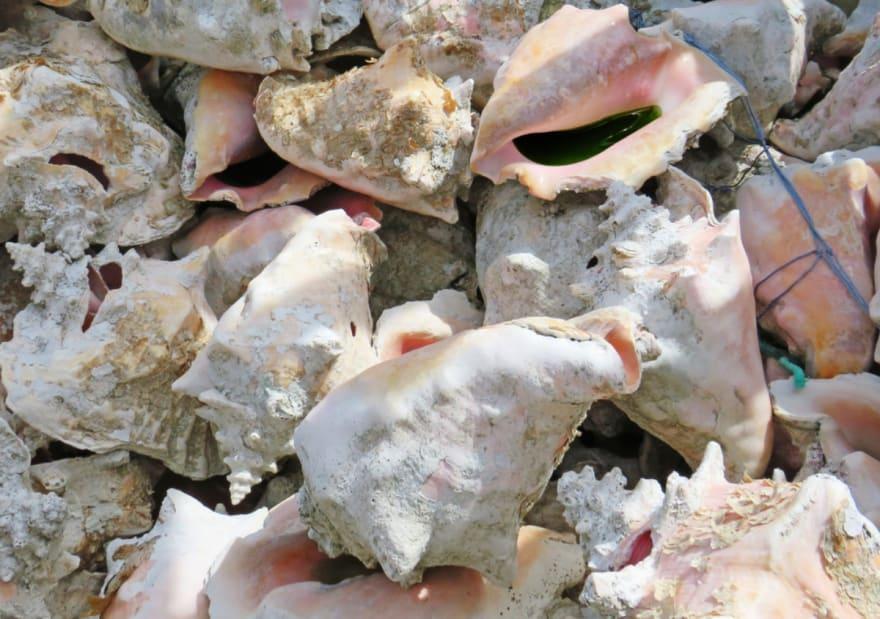 Hispana podría perder su beneficio de DACA solo por recoger caracoles en una playa