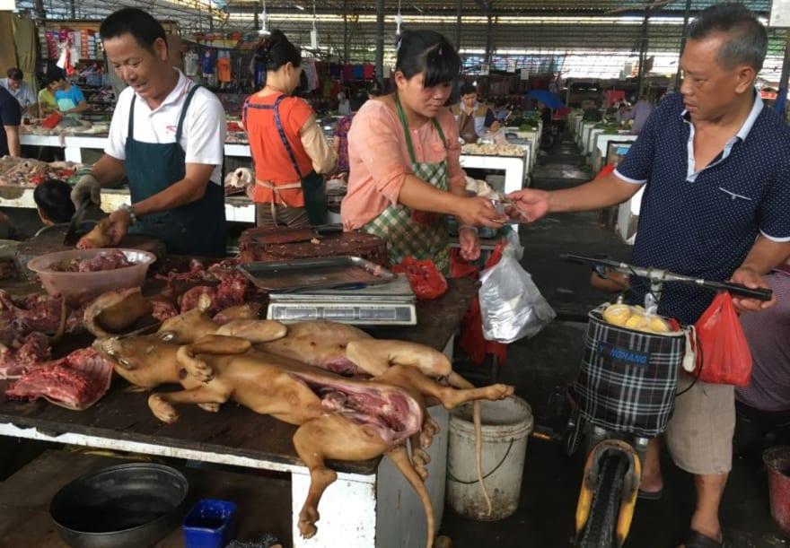 Festival de carne de perro comenzó en China y esperan matar y comer a más de 5 mil