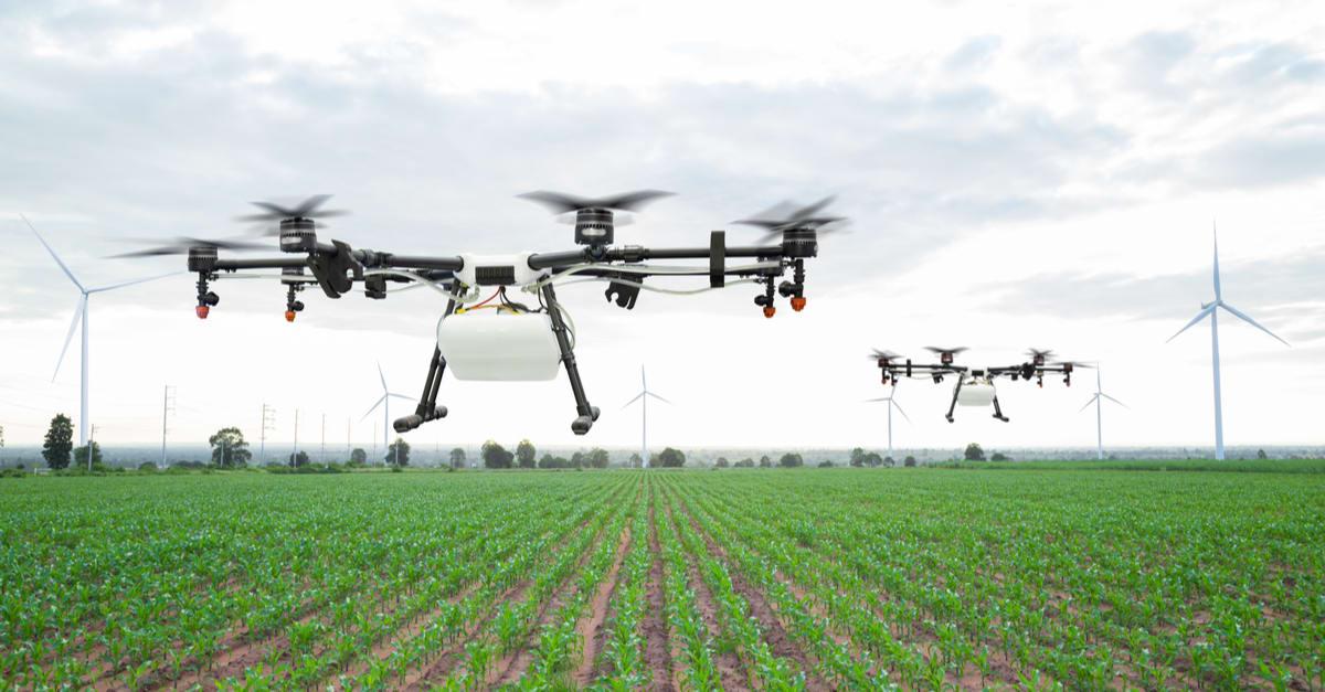 Drones comienzan a reemplazar vaqueros en granjas