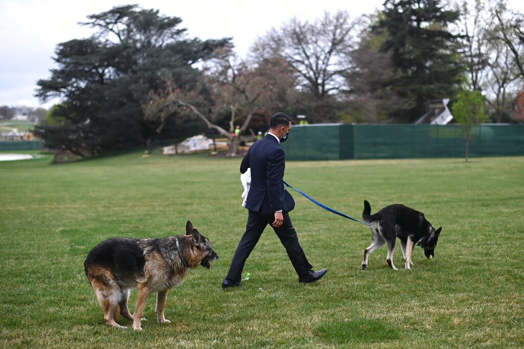 Perro de Biden hace popó en el pasillo de la Casa Blanca