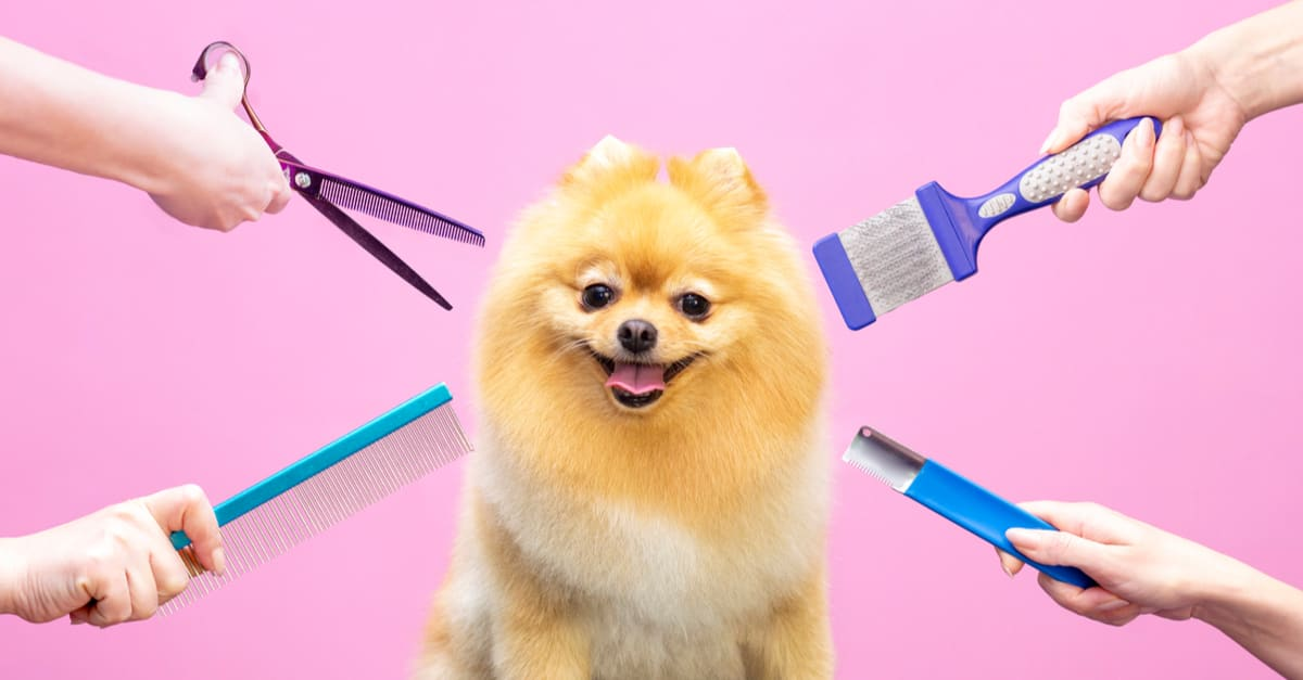 Professional cares for a dog in a specialized salon. Groomers holding tools at the hands. Pink background. groomer concept
