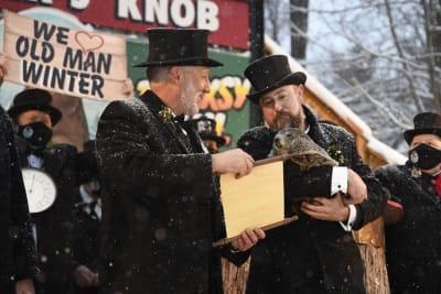 predicción marmota phil
