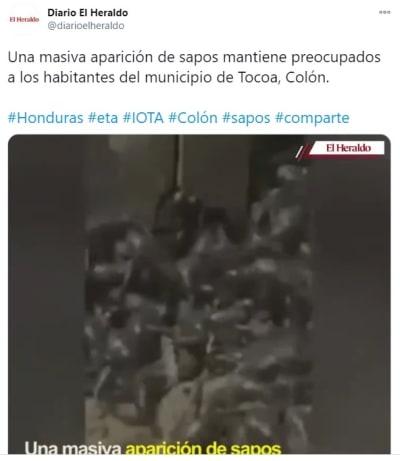 Aparición sapos Honduras 1