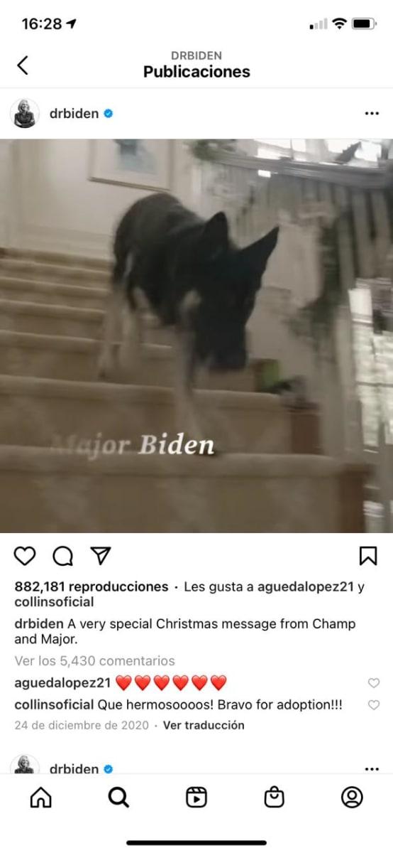 Perros Joe Biden