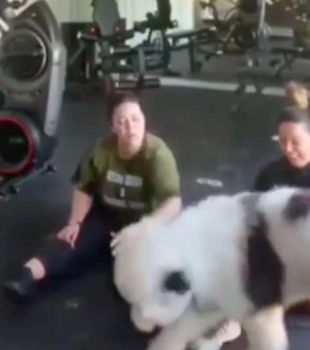 Perro de Chiquis ¿estresada por Lorenzo Méndez? (IG)