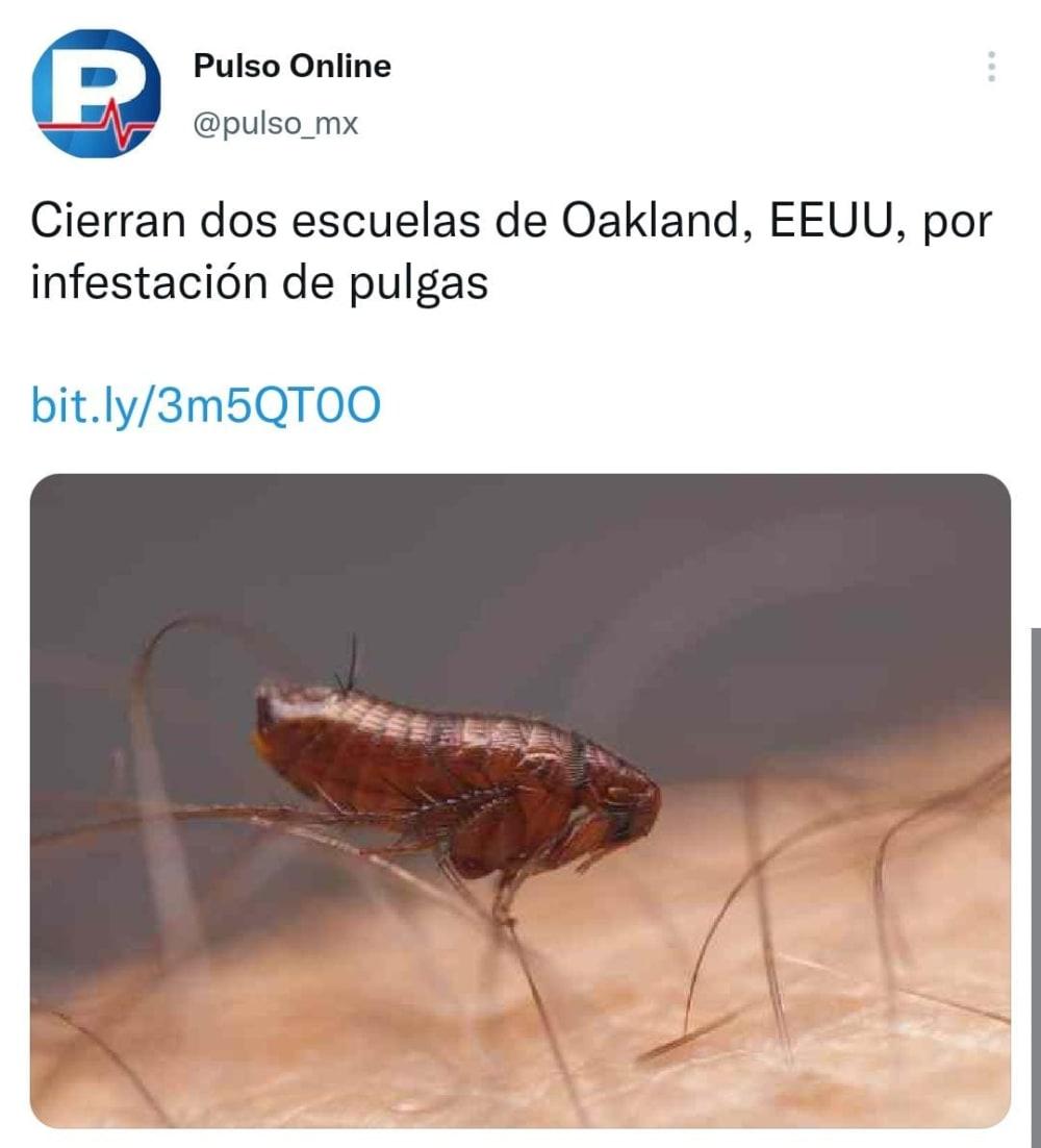 Cierran escuelas en EE.UU. por plagas de pulgas