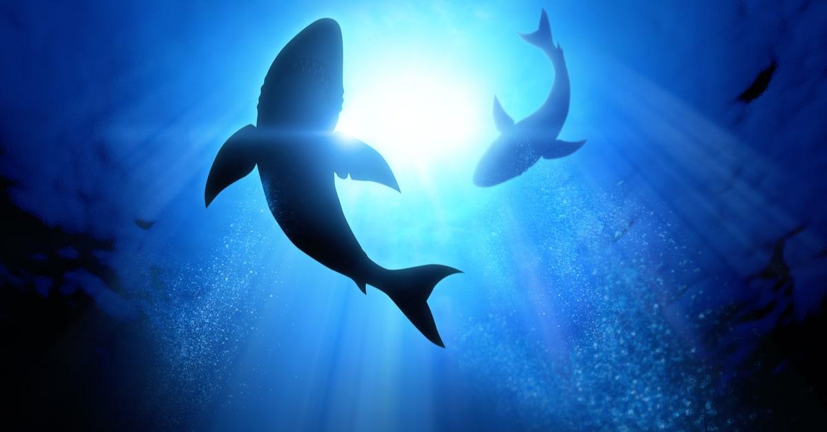 Sombras de tiburones