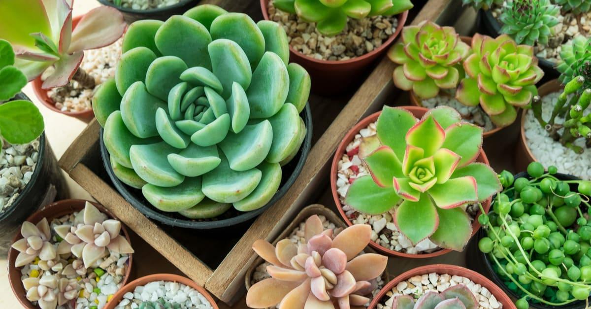 Plantas suculentas que están en ofertas