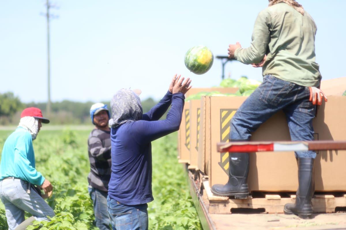 Ola de calor estaría afectando a hispanos; piden salvar energía para lo que viene