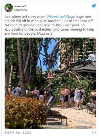 Gran árbol colapsa y deja al menos a 7 personas heridas