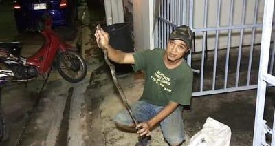 Sentado inodoro mordió serpiente: Aún está aterrado (VIDEO y FOTOS)