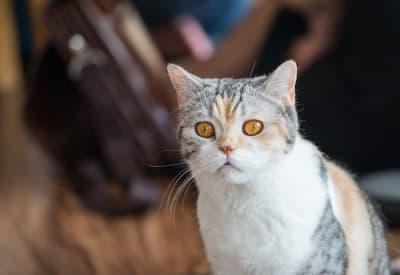 Gatos como garfield