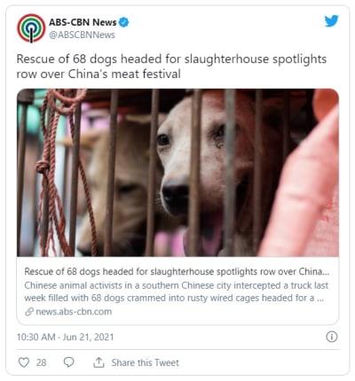 68 perros fueron rescatados del festival de carne de perro de China
