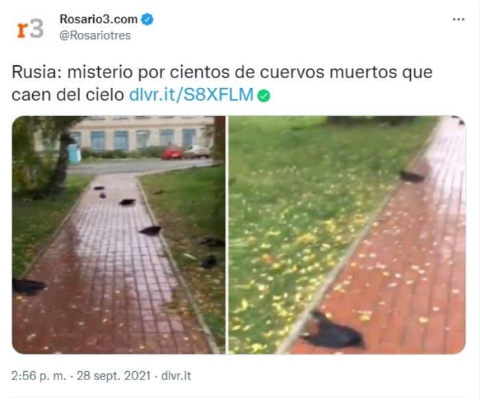 """Cuervos caen muertos cielo: """"Estoy impactado"""""""