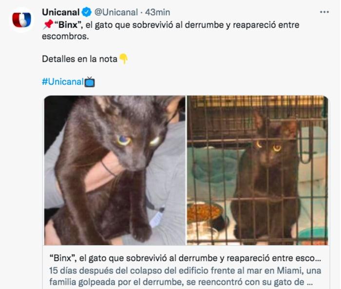 """Gato sobreviviente edificio derrumbado: """"Esto es un milagro"""""""